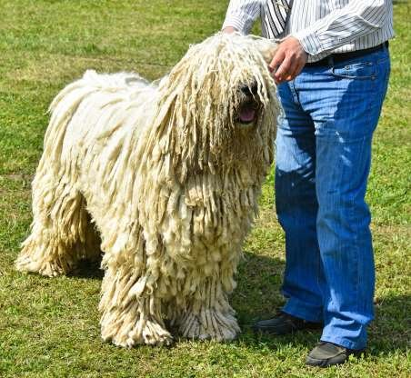 BIGGEST DOG BREEDS PICTURE OF THE DAY # 16 Colossal canines: See the